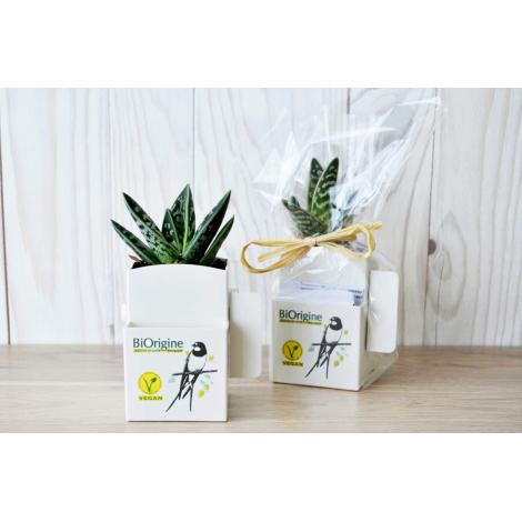 La Végétal-box dépolluante et publicitaire