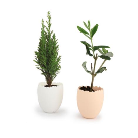 Mini plant d'arbre personnalisable dans son pot oeuf
