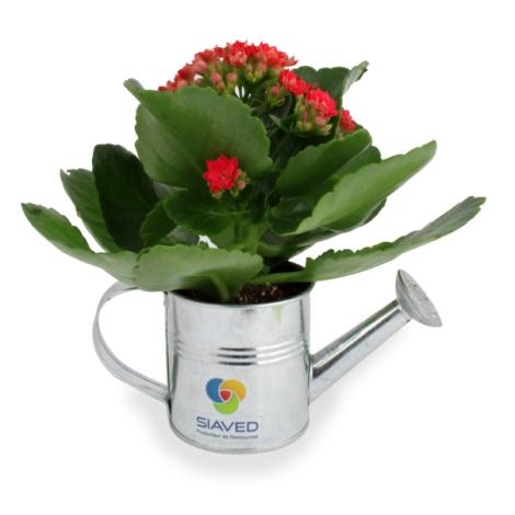 Arrosoir publicitaire en zinc avec mini plante