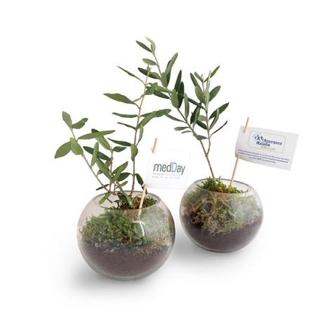 Globe publicitaire contenant un olivier