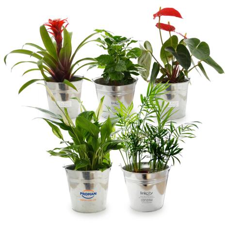Grande plante déco pot en zinc publicitaire