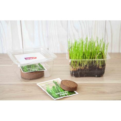 Boîte de plantation en plastique recyclé personnalisable