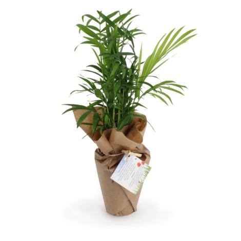 Plante dépolluante personnalisée zéro déchet