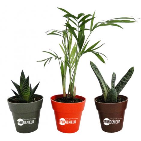 Plante déco en pot écolo publicitaire